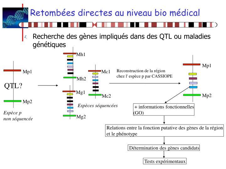 Retombées directes au niveau bio médical