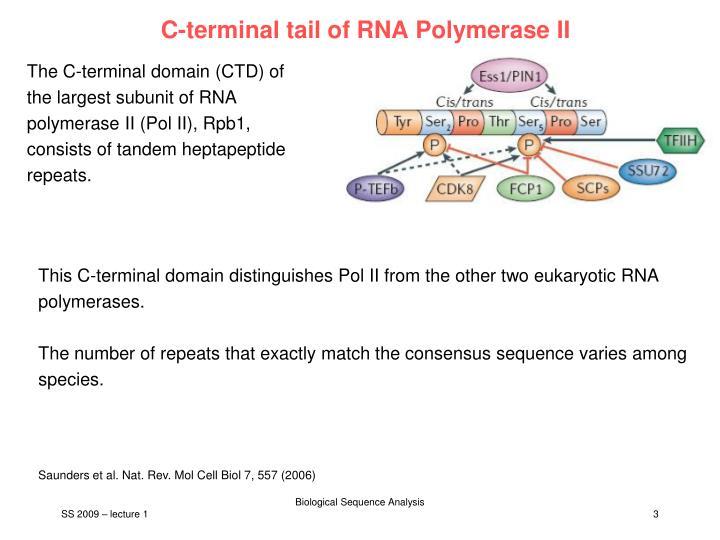 C-terminal tail of RNA Polymerase II