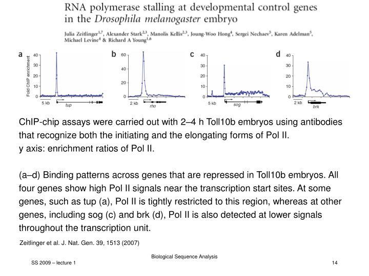 Pol II binding profiles