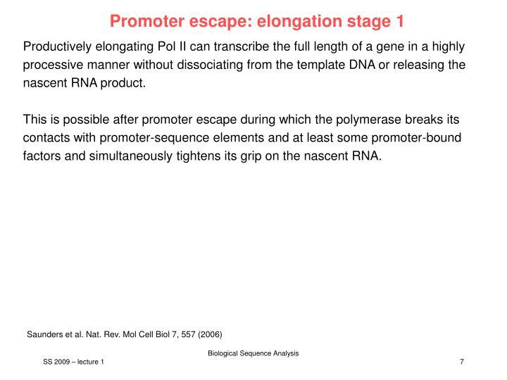 Promoter escape: elongation stage 1
