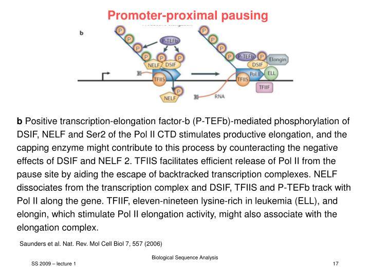 Promoter-proximal pausing