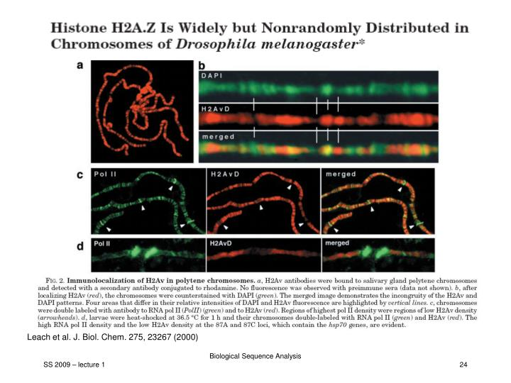 Leach et al. J. Biol. Chem. 275, 23267