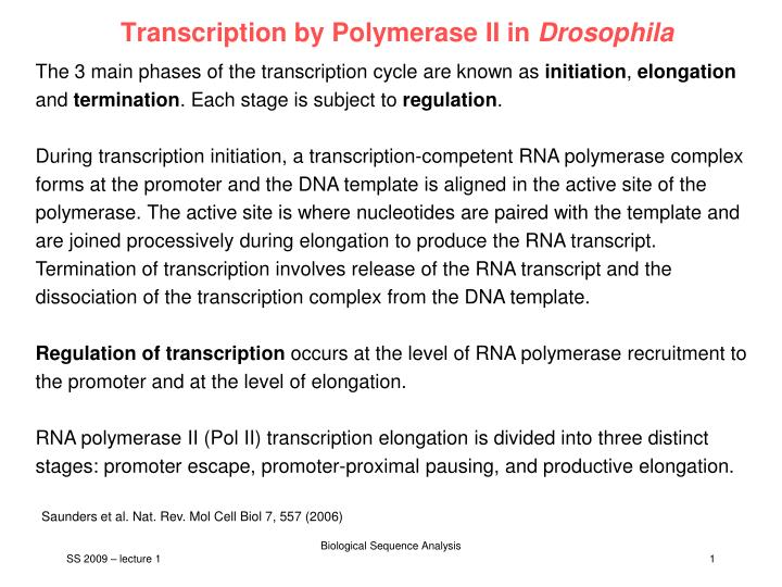 Transcription by Polymerase II in