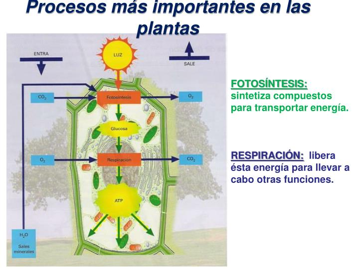 Procesos más importantes en las plantas
