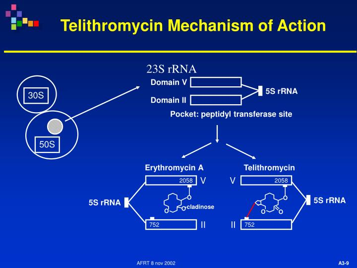 Telithromycin Mechanism of Action