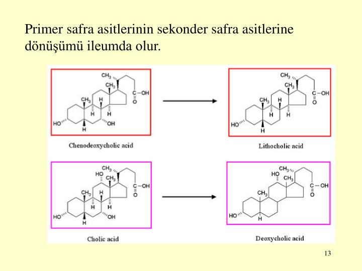 Primer safra asitlerinin sekonder safra asitlerine dönüşümü ileumda olur.
