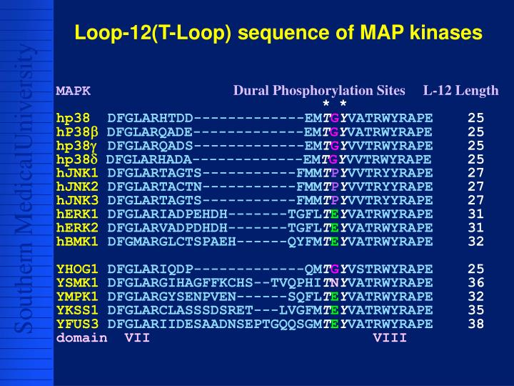 Loop-12(T-Loop) sequence of MAP kinases