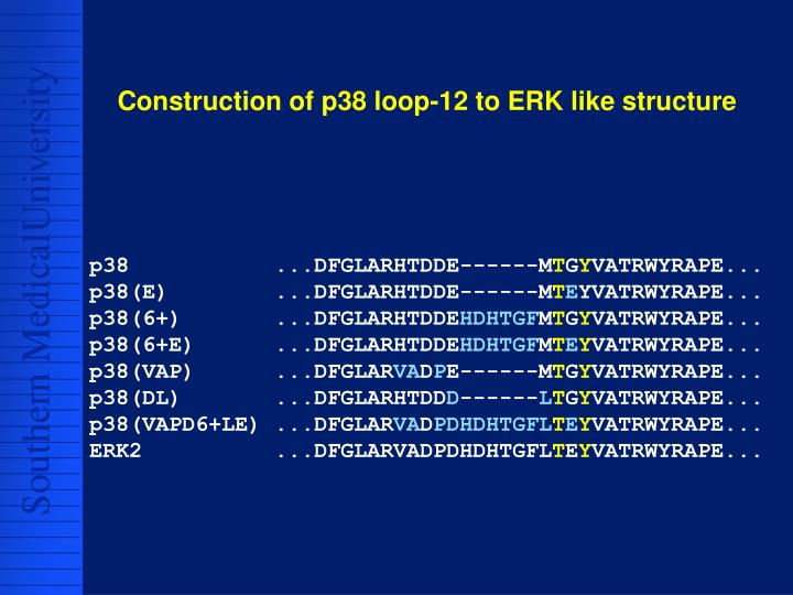 Construction of p38 loop-12 to ERK like structure