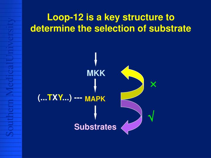 Loop-12 is a key structure to determine the selection of substrate