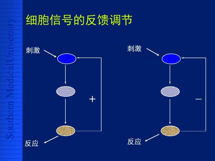 细胞信号的反馈调节