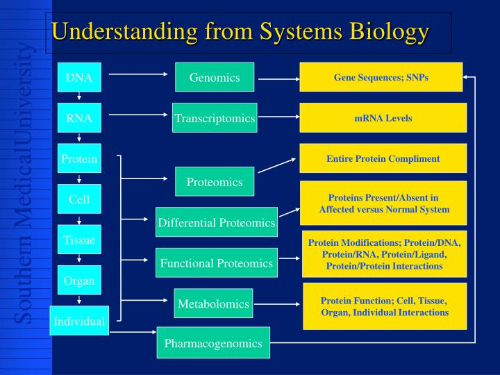 Understanding from Systems Biology