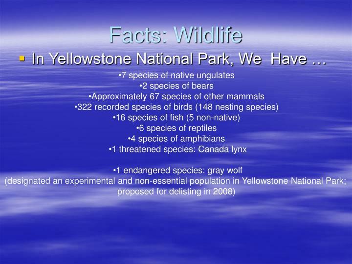Facts: Wildlife