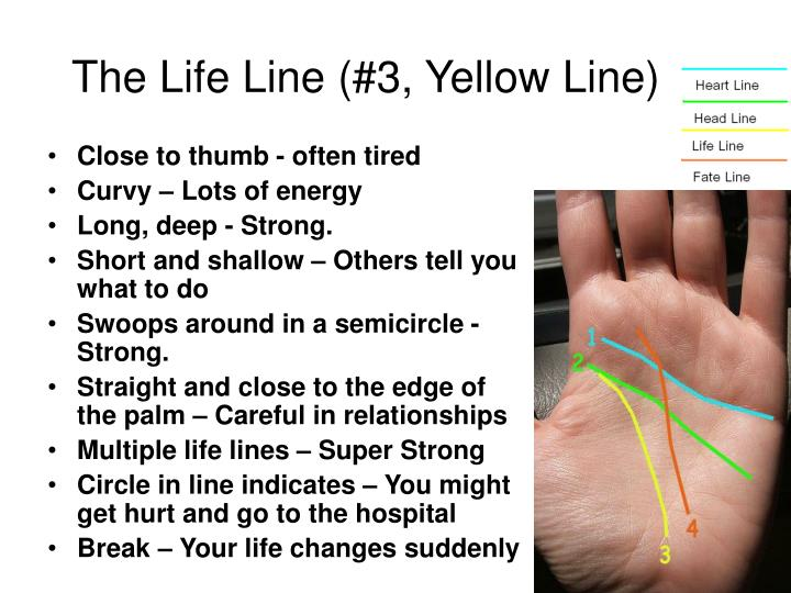The Life Line (#3, Yellow Line)