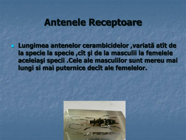 Antenele Receptoare