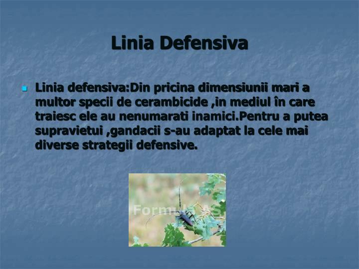 Linia Defensiva