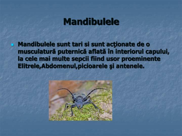 Mandibulele