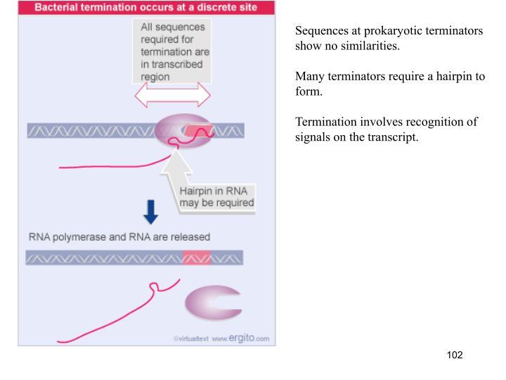 Sequences at prokaryotic terminators