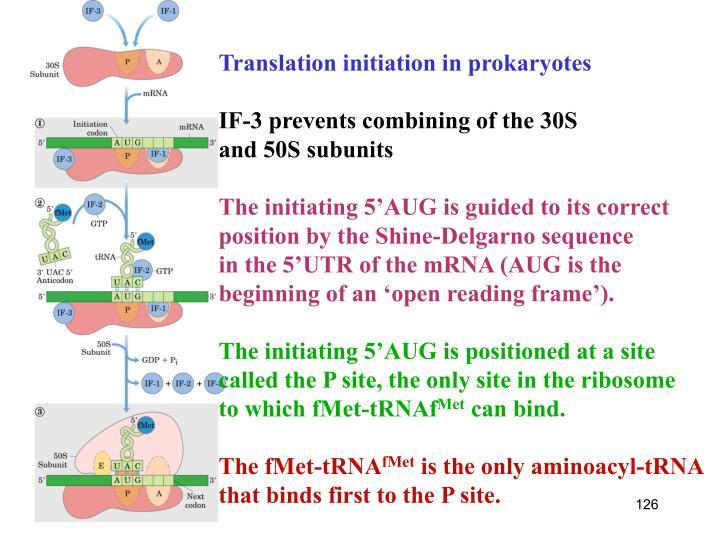 Translation initiation in prokaryotes