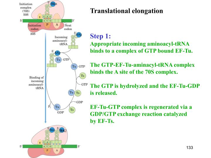 Translational elongation
