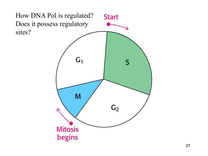 How DNA Pol is regulated?