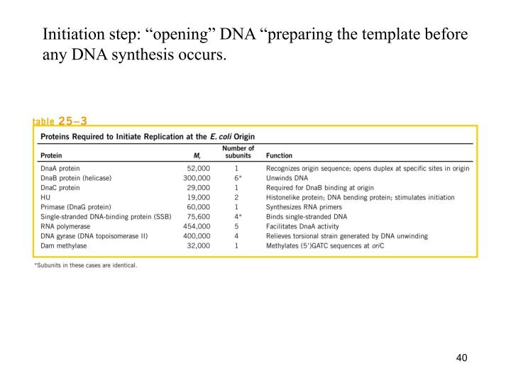 "Initiation step: ""opening"" DNA ""preparing the template before"
