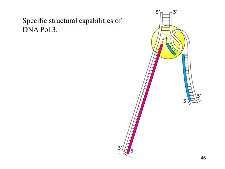 Specific structural capabilities of