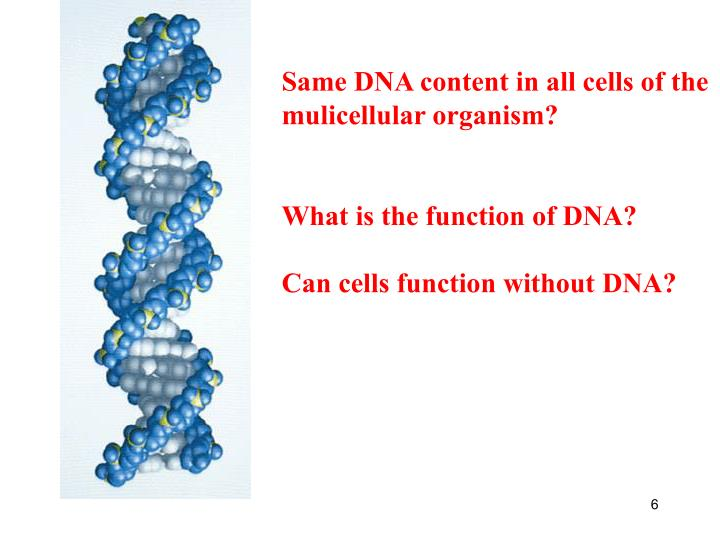 Same DNA content in all cells of the