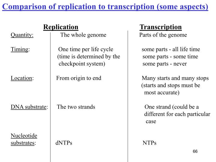 Comparison of replication to transcription (some aspects)