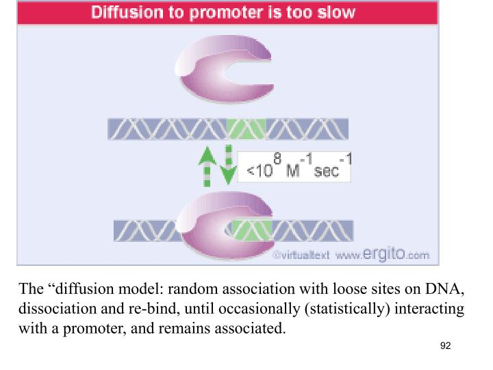 "The ""diffusion model: random association with loose sites on DNA,"