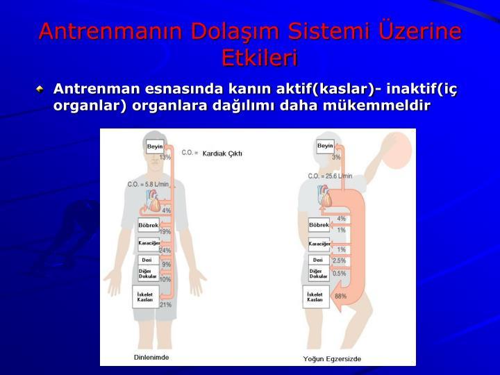Antrenman esnasında kanın aktif(kaslar)- inaktif(iç organlar) organlara dağılımı daha mükemmeldir