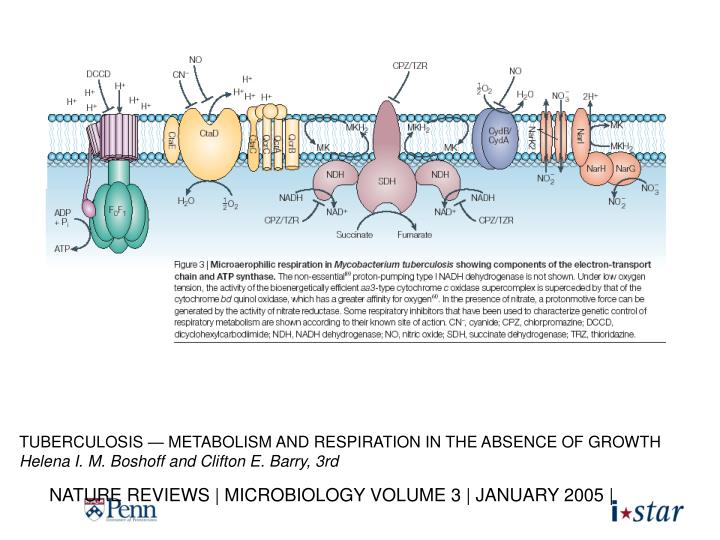 TUBERCULOSIS — METABOLISM AND RESPIRATION IN THE ABSENCE OF GROWTH