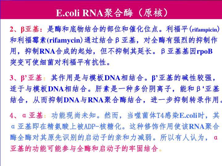 E.coli RNA