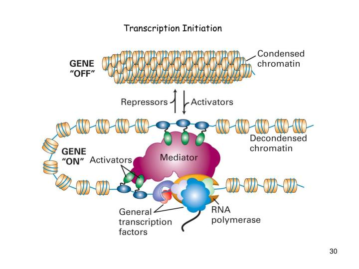 Transcription Initiation