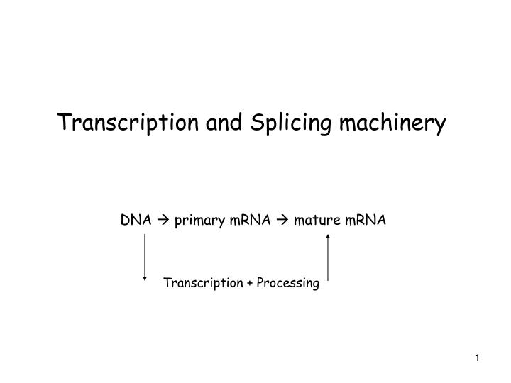 Transcription and splicing machinery