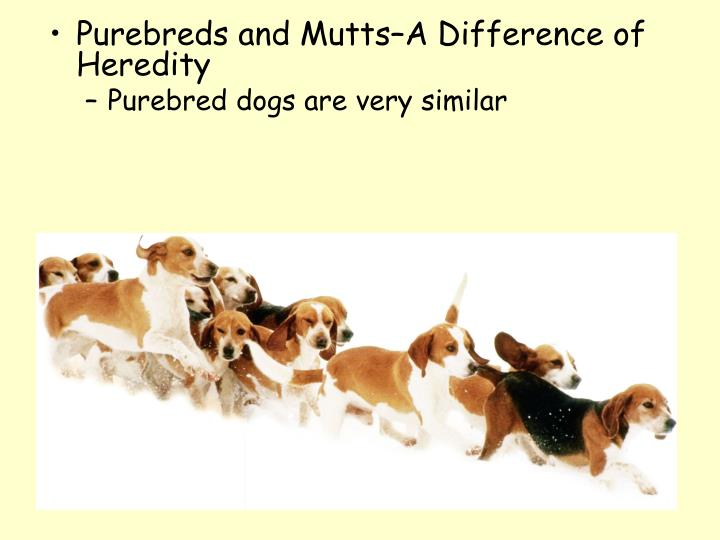 Purebreds and Mutts–A Difference of Heredity