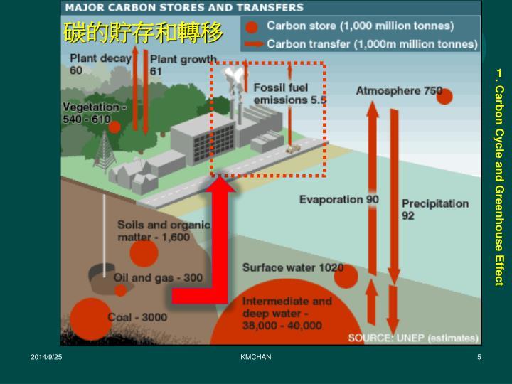 碳的貯存和轉移