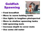 goldfish spawning