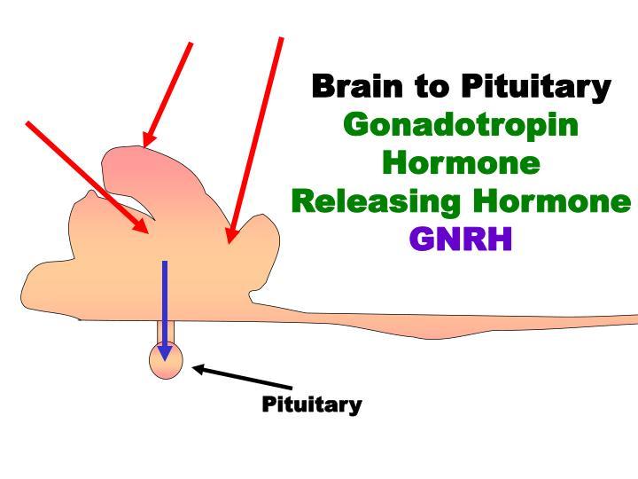 Brain to Pituitary