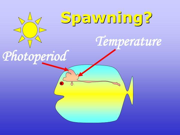 Spawning?