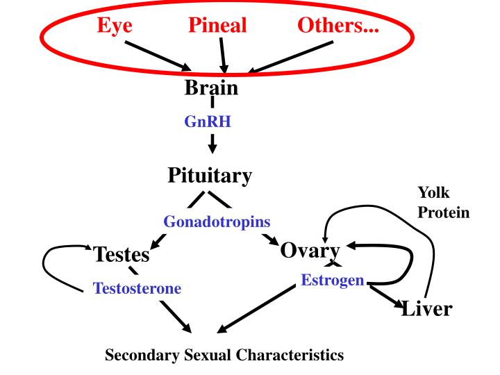 Eye          Pineal         Others...