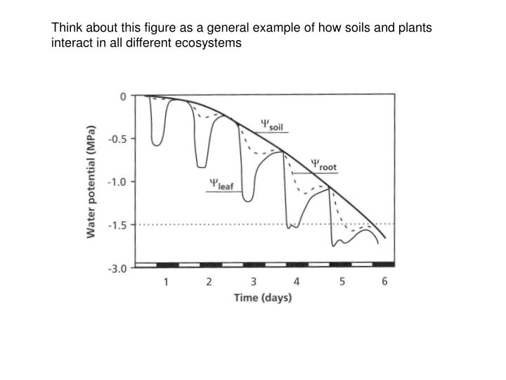 Think about this figure as a general example of how soils and plants interact in all different ecosystems