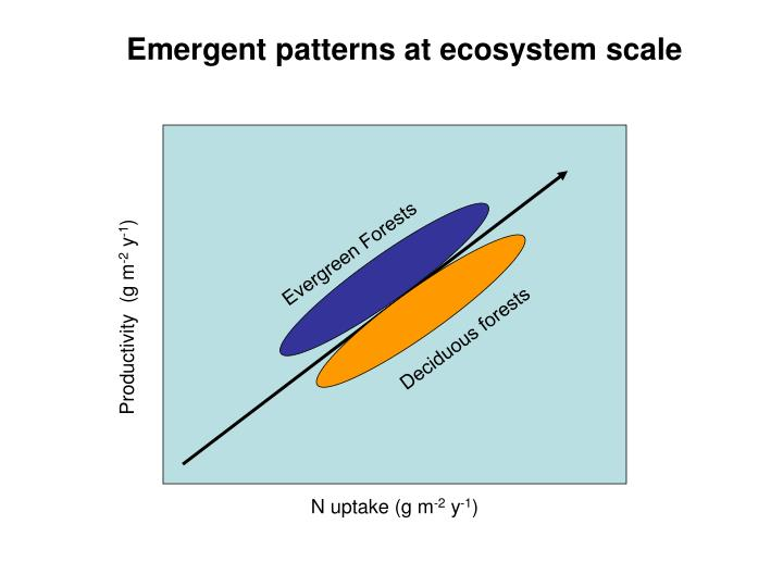 Emergent patterns at ecosystem scale