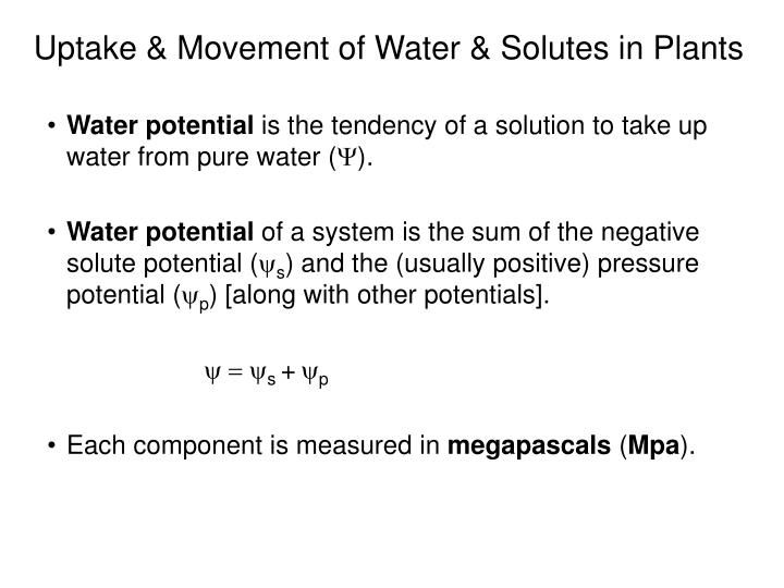 Uptake & Movement of Water & Solutes in Plants