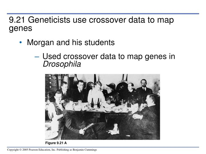 9.21 Geneticists use crossover data to map genes