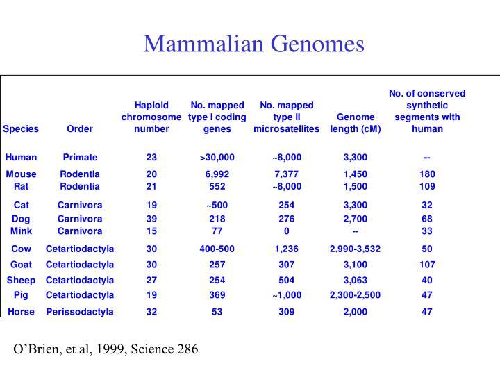 Mammalian Genomes