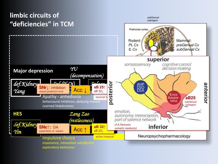 limbic circuits of