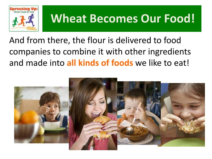 Wheat Becomes Our Food!