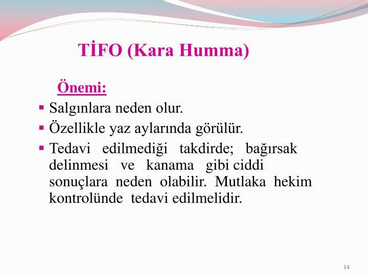 TİFO (Kara Humma)