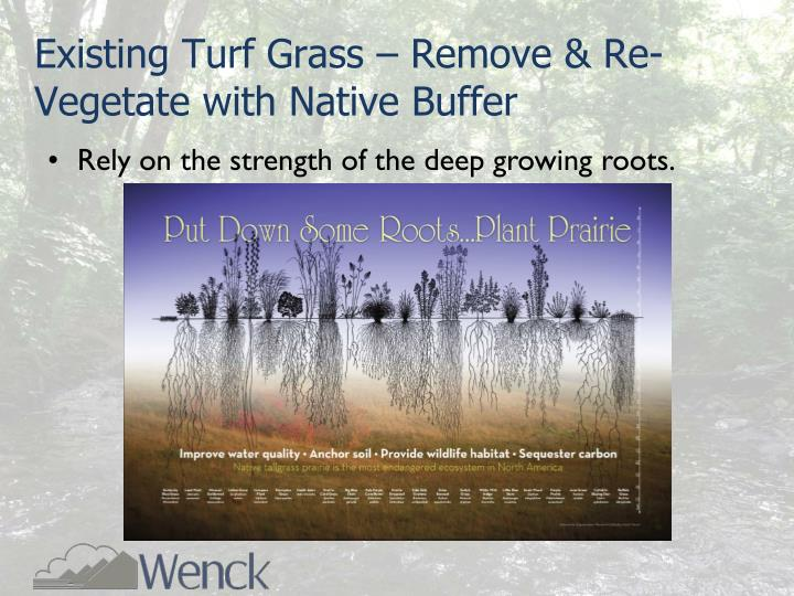 Existing Turf Grass – Remove & Re-Vegetate with Native Buffer