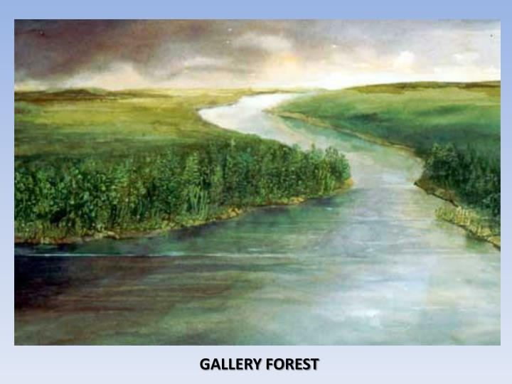 GALLERY FOREST